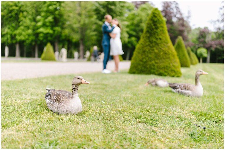 Wildgänse vor einem Brautpaar auf einer Wiese